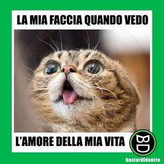 Quando vedi l' #amore della tua vita! #bastardidentro #gatto #ipnoticamentebastardidentro www.bastardidentro.it