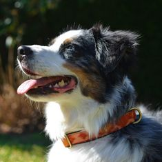 Ready to help furry friends and look gorgeous? Did you know that we donate of every purchase directly to All of our Productes are made out of unique Ikat fabric. Aussie Dogs, Dog Beach, Ikat Fabric, Dog Bandana, Dog Collars, Australian Shepherd, Dog Accessories, Looking Gorgeous, Making Out
