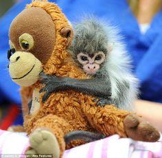 con monkey!
