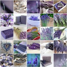 I love lavender by LHDumes, via Flickr
