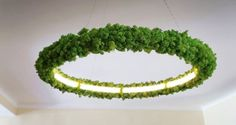 Oleant Luminaire is indoor lighting fixture growing Icelandic moss Moss Wall Art, Moss Art, Moss Decor, Floral Chandelier, Modern Lighting Design, Arte Floral, Plant Design, Cheap Home Decor, Designer
