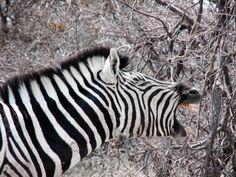 Road trip en Namibie, entre animaux sauvages et désert du Namib Nursing Profession, Travel Nursing, Photos Voyages, Road Trip, Animals, Nature, Destinations, Places, Blog