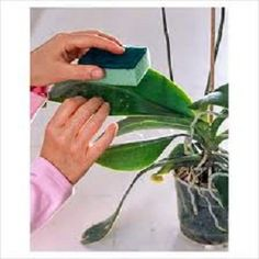 How to Clean Your Indoor Houseplants #stepbystep I have been looking for this for my entire life. So helpful.