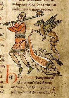 Dragon and Scorpion by renzodionigi.