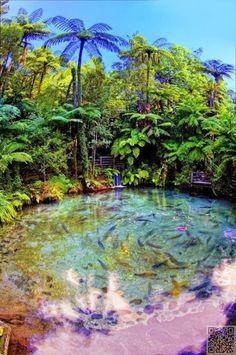 36. #Rotorua, New Zealand - #Worldwide Adventures: a #Bucket List of Unpredictable and #Non-Cliché Destinations ... → #Travel #Natural