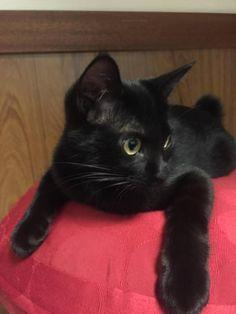おまえら黒猫好き?見てってよ : ハムスター速報