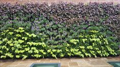 Green Living Walls Roofing Green Infrastructure Scotscape Landscaping an...