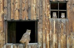 Babies Owl with Her Mother in House Pinned by www.myowlbarn.com