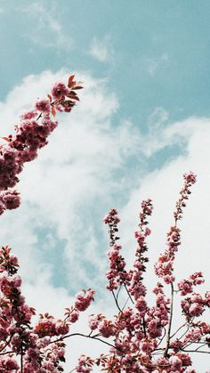 Tumblr Wallpaper, Whats Wallpaper, Wallpapers Tumblr, Cool Wallpaper, Aesthetic Backgrounds, Aesthetic Iphone Wallpaper, Aesthetic Wallpapers, Flower Iphone Wallpaper, Pastel Wallpaper