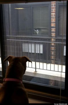 Chat et chien qui sont voisins - Cat and dog are neighbors