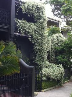 88 Best Coloured Terraced Houses Images Destinations Windows City - A-lovely-grey-house-in-paddington-sydney