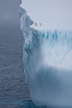 Penguins on iceberg #penguin #animallovers #animals