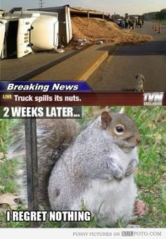 I hate squirrels