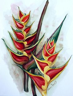Heliconia Tropicana Trinidad Painting by Karin Best - Heliconia Tropicana Trinidad Fine Art Prints and Posters for Sale