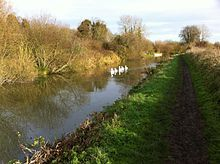 Example of English swans on the Kennet And Avon Canal