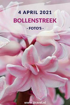 Op 4 april 2021 fietste ik opnieuw naar de Bollenstreek. De reden: hyacinten rond Lisse, Voorhout en Sassenheim fotograferen. Lees je mee over mijn bezoek aan de Bollenstreek? #bollenstreek #bollenvelden #hyacinten #jtravel #jtravelblog #fotos