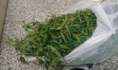 Operativos policiales en Escobar: ocho detenidos y 239 gramos de marihuana secuestrados