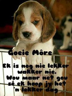 Ehhhh, I'll try to translate this roughly: Good morning, I am not fully awake yet, but I just want to say quickly that I hope you have a good day! Good Morning Good Night, Good Night Quotes, Good Morning Wishes, Day Wishes, Lekker Dag, Afrikaanse Quotes, Goeie More, Motivational, Nice