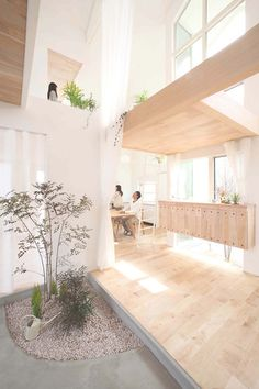 """When some architects talk about """"bringing the outside in,"""" they're referring to wider windows and sliding doors. ALTS Design Office means it literally. The firm's Kofunaki House, completed in March, is filled with shrubs, succulents, and small trees."""