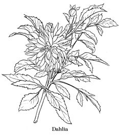 Dahlia is a beautiful flower. Here is a collection of dahlia for you coloring. Doing coloring with dahlia flower is a fun and enjoyable acti. Flower Embroidery Designs, Embroidery Motifs, Photo Stitch, Floral Drawing, Flower Drawings, Machine Embroidery Projects, Autumn Painting, Flower Coloring Pages, Free Printable Coloring Pages