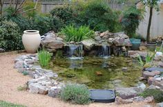 water garden with bog on top of waterfall. Bogs house marginal plants that function to filter the water.