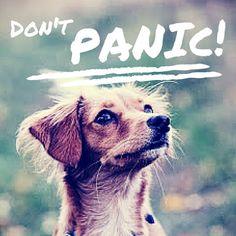 Dog don't Panic