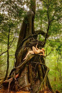 Intimate Photography, Nude Photography, Yakushima, Red Cedar, Buy Prints, Natural History, Japanese, Portrait, Nature
