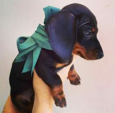 I cannot resist a dachshund puppy....perfect gift for yourself. . . www.savingpepper.com