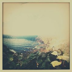 engulfing the sea. ++ satsuki shibuya / curiosities & the unknown.