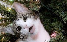 ラブリー-KittyCats、catp0rn:HEのAWHです:-)どれだけ興奮LOOK