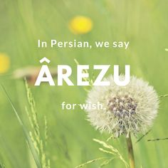 Arezu-Wish | © Culture Trip/Pontia Fallahi