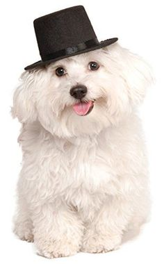 Rubies Costume Company Top Hat for Your Pet, Small/Medium... https://www.amazon.com/dp/B00JSMXET0/ref=cm_sw_r_pi_dp_x_hdG3ybGN3MSB5
