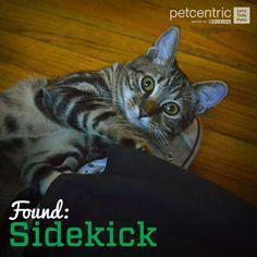 Repin if you think #pets make the best sidekicks! #bestfriends #joyofpets