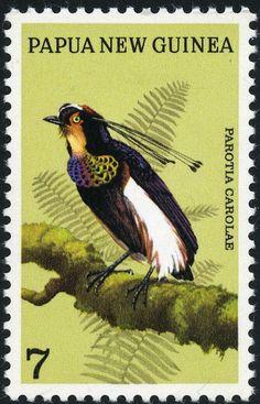 La ave del Paraíso de Carola es una especie de ave paseriforme de la familia Paradisaeidae. Es un ave de tamaño mediano que vive en las selvas de las montañas del centro de la isla de Nueva Guinea.