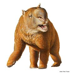 """Diprotodon, meaning """"two forward teeth"""", sometimes known as the giant wombat or the hippopotamus wombat, is the largest known marsupial ever to have lived. Along with many other members of a group of unusual species collectively called the """"Australian megafauna"""", it existed from approximately 1.6 million years ago until extinction some 46,000 years ago."""