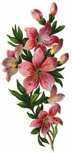 flower corners_006 (285x600, 153Kb) Illustration Blume, Botanical Illustration, Arte Floral, Decoupage Paper, Flower Wallpaper, Fabric Painting, Vintage Flowers, Retro Flowers, Vintage Floral