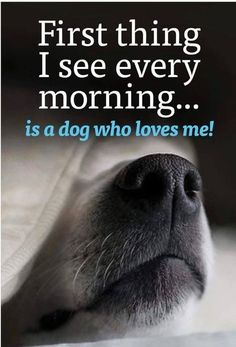 And Im lucky cuz I have two I see every morning! - Funny Dog Quotes - And Im lucky cuz I have two I see every morning! The post And Im lucky cuz I have two I see every morning! appeared first on Gag Dad. All Dogs, I Love Dogs, Puppy Love, Best Dogs, Cute Dogs, Dogs And Puppies, Doggies, Dog Quotes Love, Dog Lover Quotes