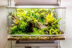The Biopod Terra in action
