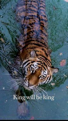 Tier Wallpaper, Animal Wallpaper, Animals And Pets, Baby Animals, Cute Animals, Wild Animals, Beautiful Creatures, Animals Beautiful, Beautiful Cats Pics