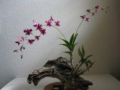 ikebana and driftwood - Bing images Indoor Orchids, Orchids Garden, Indoor Plants, Hanging Orchid, Diy Hanging, Ikebana, Mini Orquideas, Orchid Planters, Patio Planters