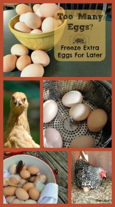 Do you have too many eggs? Freeze them for later!