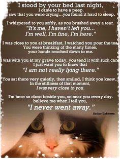 Loss of a pet | Feeling alone | Sadness | Heartache | Grief stricken: Never far, always near. ❤️❤️