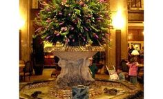 World  Famous Peabody Ducks at the Peabody Hotel in Memphis.  We love the bar in the lobby, great place for a cocktail!