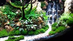 Aquascape with fish, tree, waterfall.