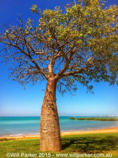 How's the view from where your standing? This Boab at Town Beach in Broome, Western Australia enjoys a great look.