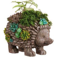 New Creative Succulent Garden Hedgehog Planter | Wayfair