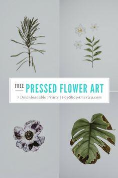 free pressed flower
