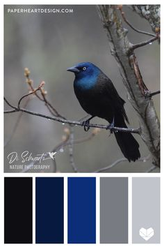 6 Color Palettes Inspired by Birds, Nature Photography Photos by Di Schwartz Nature Photography. See six color palettes inspired by nature and birds. Pastel Colour Palette, Pastel Colors, Paint Colors, Pastel Blue, Colour Schemes, Color Combos, Photography Photos, Nature Photography, Polo Sul