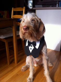 Dog Tuxedo Bow Tie Wedding Special Event by CamargoCreations, $18.00