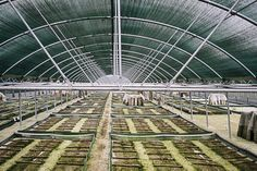 snail farm naousa imathia Snail Farming, Black Soldier Fly, Shipping Containers, Beetles, Snails, Caviar, Atv, Mushrooms, Insects